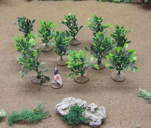 Desert Plants Pack - Leaf